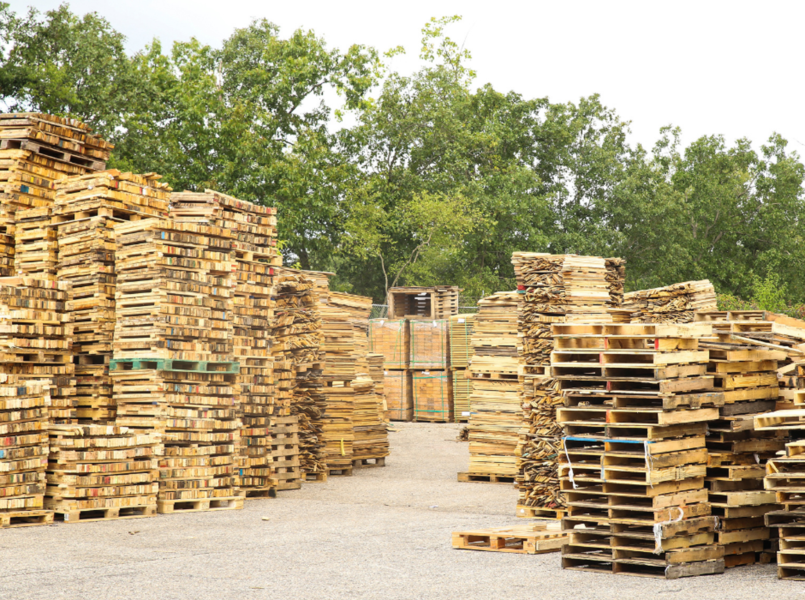 New or Recycled Pallets: Which is Right or Your Business?